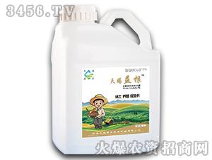 含腐植酸多功能水溶肥11-6-13+HA+TE-天赐益根-天赐鼎