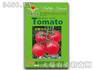 西红柿种子-龙腾1618F1-满天红日