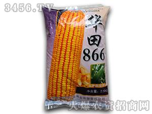 华田866-玉米杂交种-农光种业