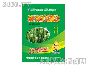 小麦种子-未来0818-地瑞种业