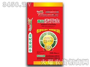 青农麦黄金-亿丰365