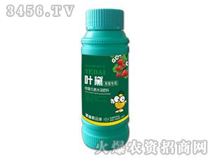 草莓专用微量元素水溶肥