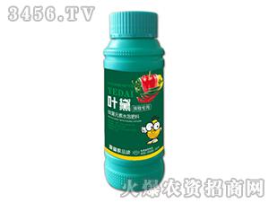 辣椒专用微量元素水溶肥