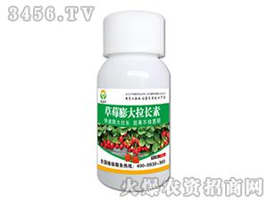 草莓膨大拉长素-豪利农