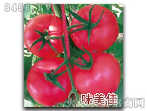 西红柿种子-味美佳-瑞恒种业