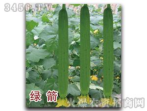 丝瓜种子-绿箭-瑞恒种业