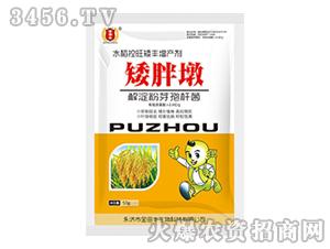 水稻控旺矮丰增产剂-矮胖墩-金田丰