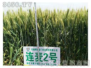 小麦种子-连麦2号-辉耀盈门