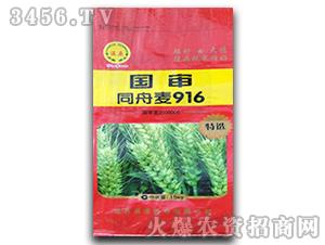 小麦种子-国审同舟麦916-温原种业
