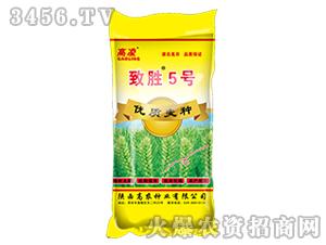 小麦种子-致胜5号-高