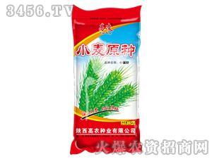 小麦原种-小偃22-高