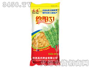 小麦种子-绵阳31-高凌