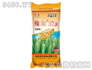 小麦种子-福高328-高凌
