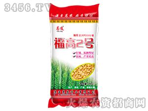小麦种子-福高2号-高凌