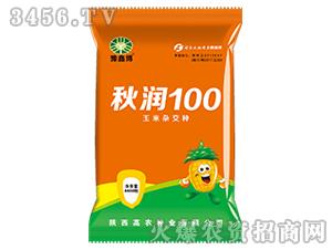玉米杂交种-秋润100-高农种业