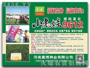 小麦种子-小虎娃9612-晨博种业