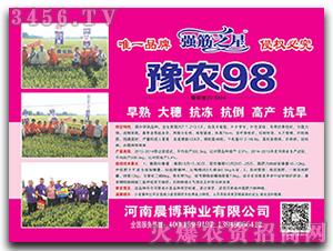 小麦种子-豫农98-晨博种业