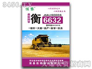 衡6632-小麦种子-佳瑞种业