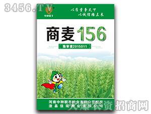 商麦156-小麦种子-佳瑞种业