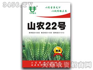 山农22号-小麦种子-佳瑞种业