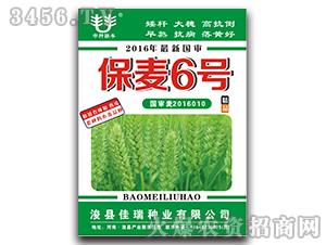 保麦6号-小麦种子-佳瑞种业