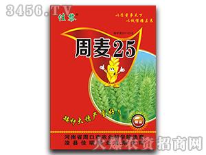 周麦25-小麦种子-佳瑞种业