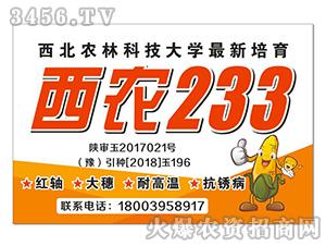 西农233-玉米种子-丰硕种业