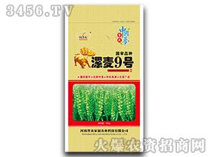漯麦9号-小麦种子-农家福