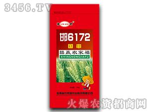 邯6172-小麦种子-农家福