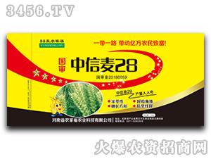中信麦28-小麦种子-农家福