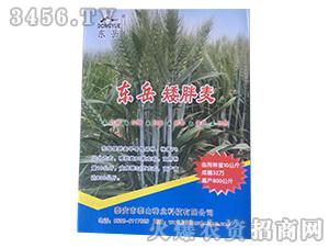东岳矮胖麦-小麦种子-泰山种业