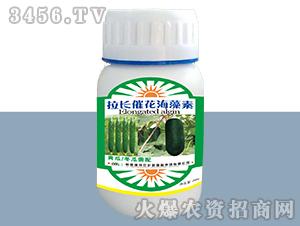 黄瓜冬瓜专用拉长催花海藻素-德邦农