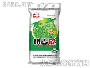 小麦种子-皖麦52号-先耕农业
