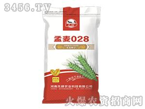 小麦种子-孟麦028-先耕农业