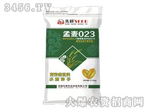 小麦种子-孟麦023-先耕农业