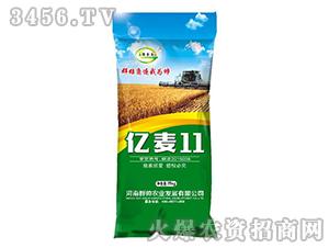 亿麦11-小麦种子-豫金谷