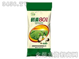 鹤麦801-小麦种子-豫金谷