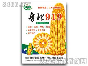 鲁北919-玉米种子-群帅