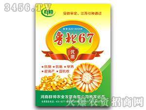 鲁北67-玉米种子-群帅