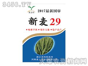 新麦29-小麦种子-垄上行种业