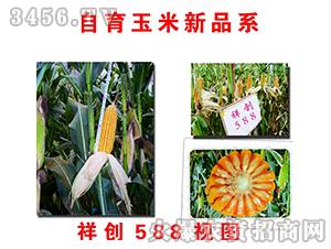 祥创588-玉米种子-