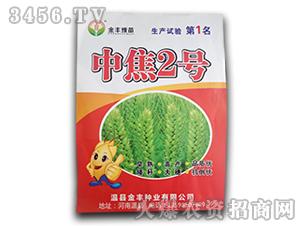 中焦2号-金丰豫苗-金丰种业