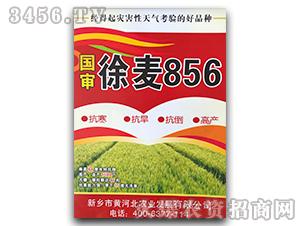 国审徐麦856-小麦种子-黄河北