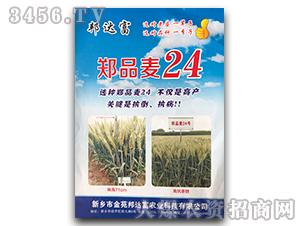 郑品麦24-小麦种子-邦达富