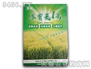 小麦种子-苏育麦1号-丰之源