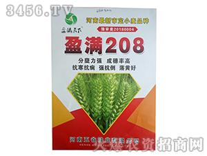 小麦种子-盈满208-五谷种业