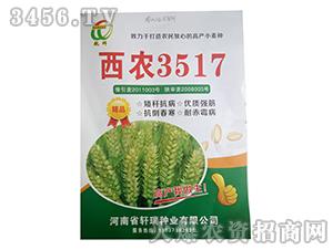 小麦种子-西农3517-轩瑞种业