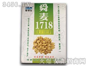 舜麦1718-小麦种子-爱邦农