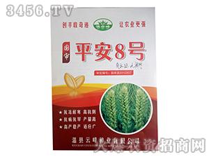 小麦种子-平安8号-云峰种业