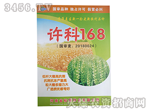 小麦种子-许科168-校博种业